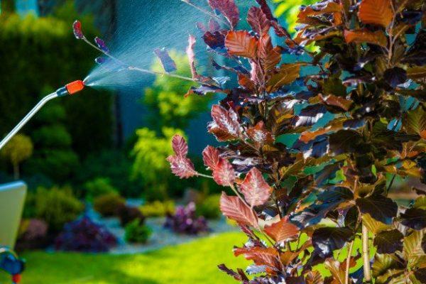 garden-pest-control-spray